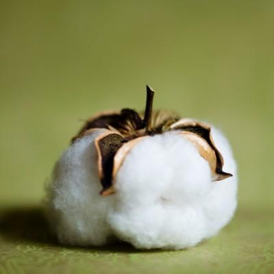 Cotton Ball No. 1