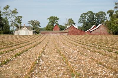 Plowed Cotton Field